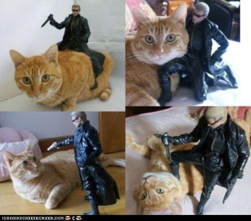 Wesker Versus Cat