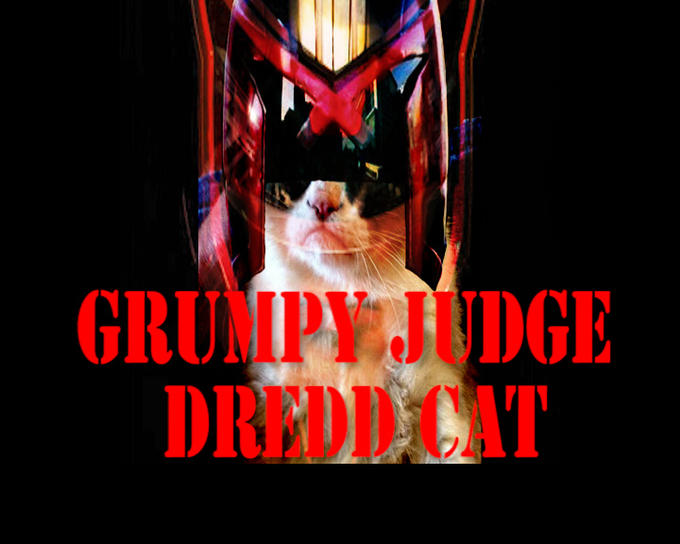 grumpy judge dredd cat