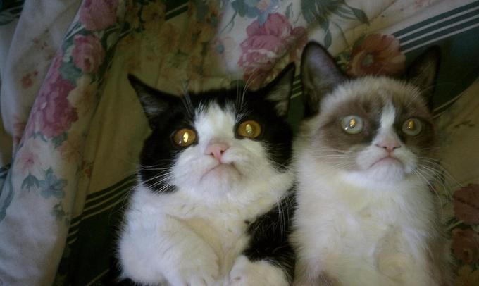 You and Me, Best Grumpy Friends Forever