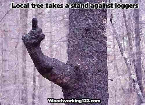 Tree that Defies Lumberjacks