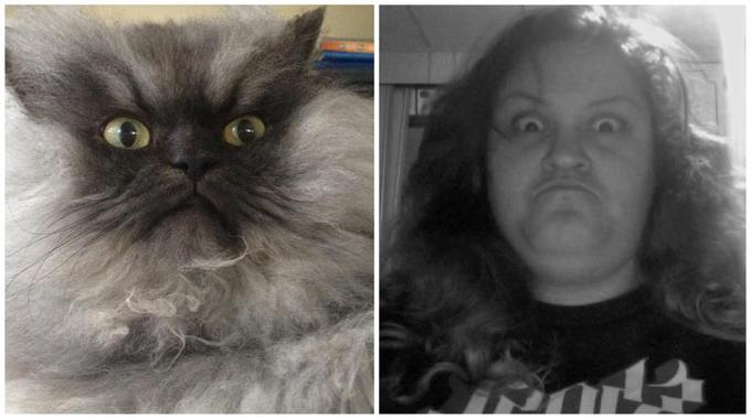 """""""The best Colonel Meow attempt has been chosen. It was based on how frowny can a frown get. And by God, THIS was a frown."""""""