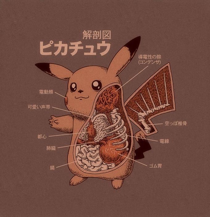 Pikachu's anatomy