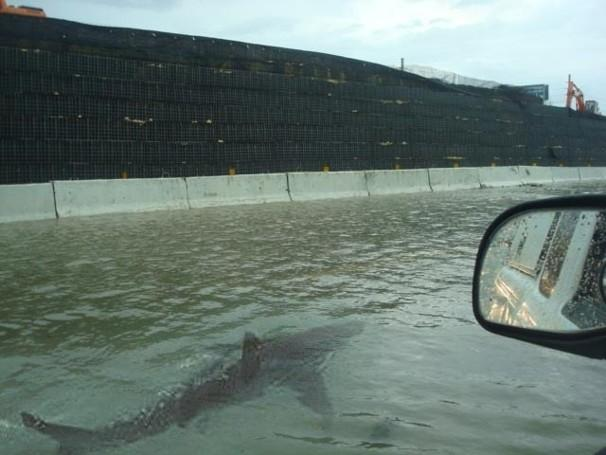 [FAKE] Shark Swims Through New Jersey