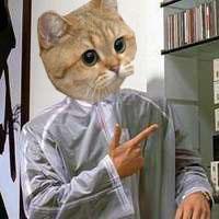 Dubs Cat