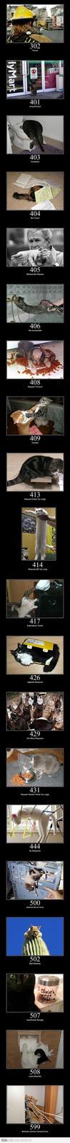 more status cats