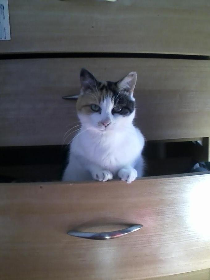 DILLIAGAF Kitty