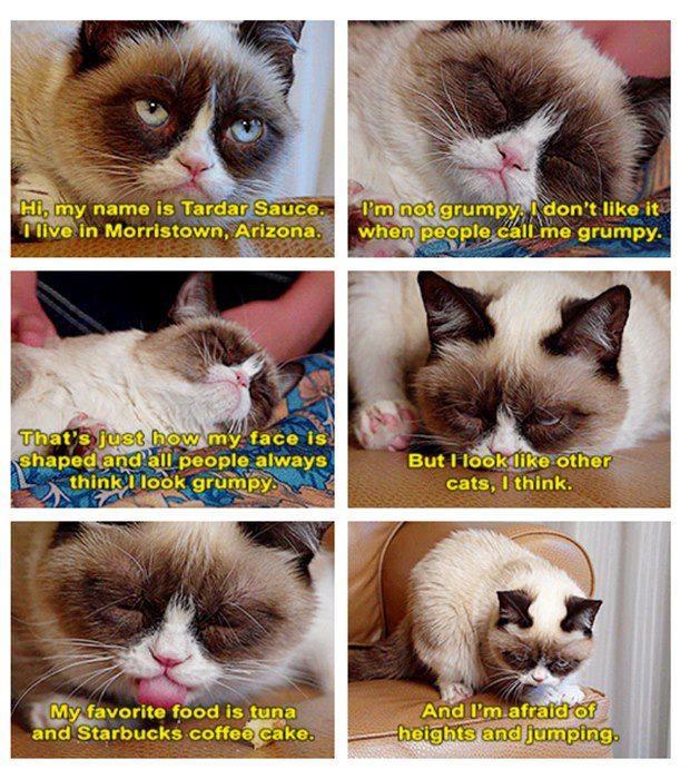 Tarder Sauce (Grumpy Cat)
