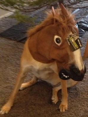 Bazinga trying out the horse head mask.