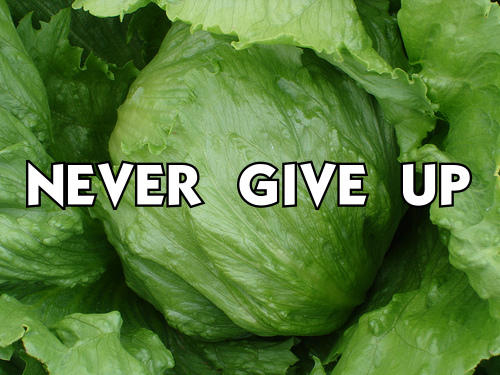 "Lettuce / It Says ""Never Give Up"" 