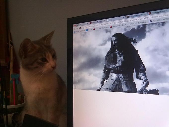 The cat was overwhelmed by Thorin's majesty