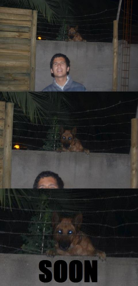 Chilean SOON Dog