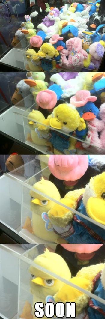 Evil Plotting Stuffed Toy Duck