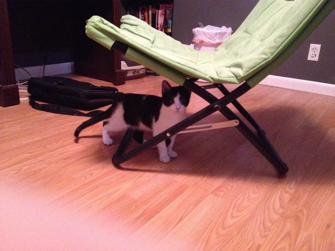 My Cat Spoticus