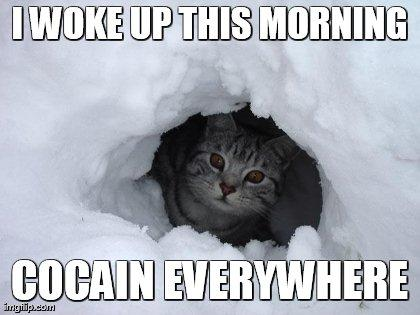 Cocain Cat