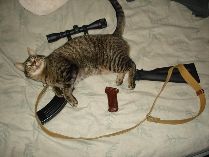Custom Cat Rifle