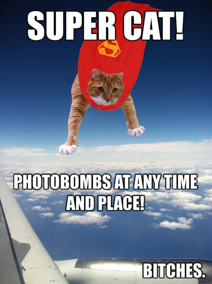 Super Cat Photobomb