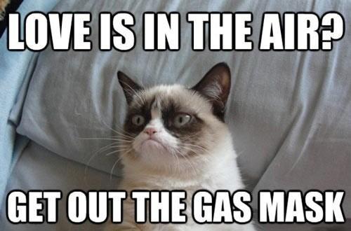Grumpy cat 19e