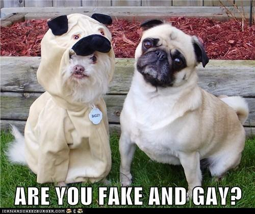 Are You Fake And Gay