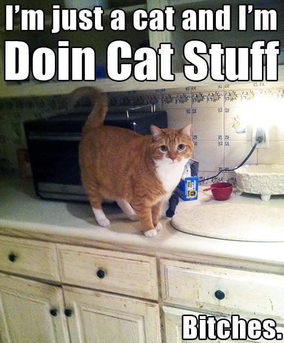 Doin Cat Stuff