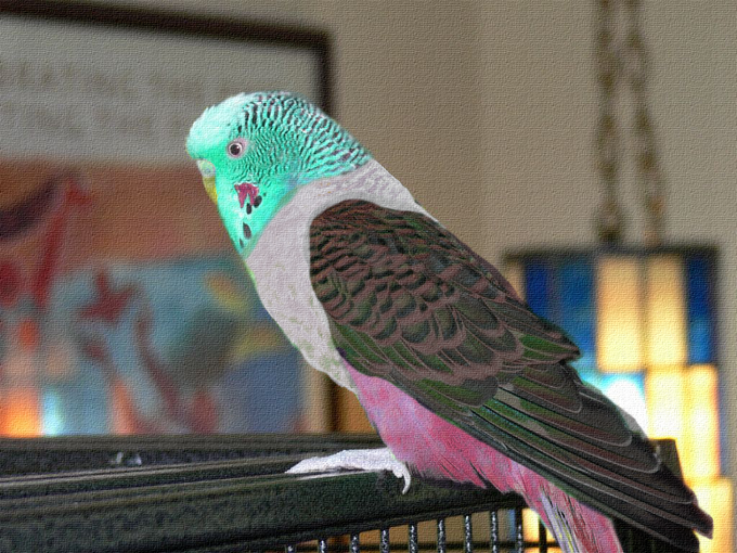Colorful Budgie