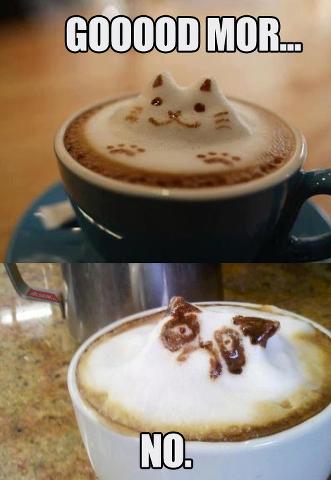 Cat & Grumpy Cat