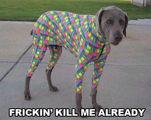 Spandex on Dog
