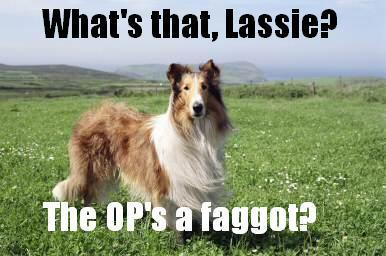 Even Lassie knows it