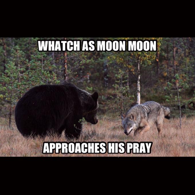 Moon moon's pray