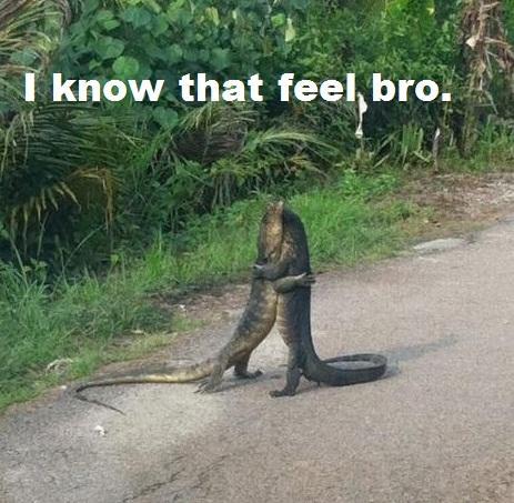 I know that feel komodo dragon