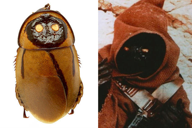 Extinct Cockroach / Jawa