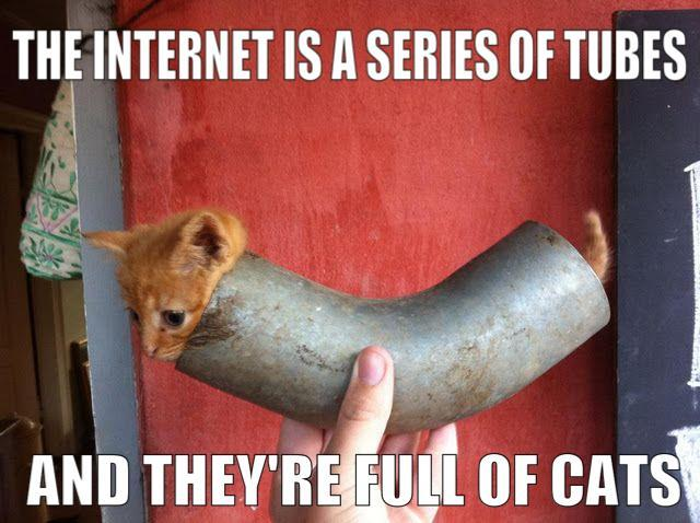 Internet and cats