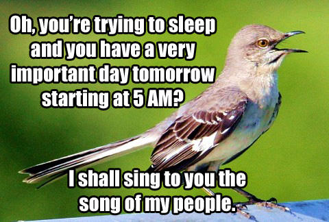 Mockinbird Song of My People