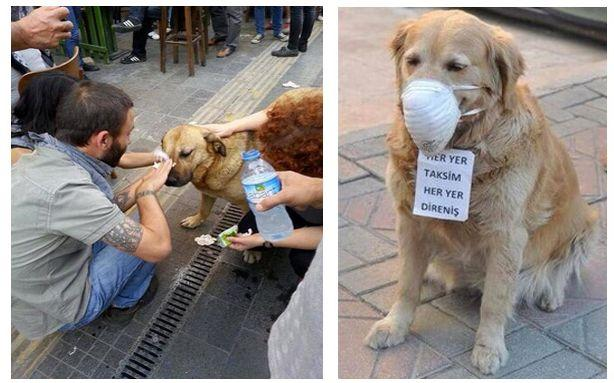 Tear Gassed Dog in Turkey