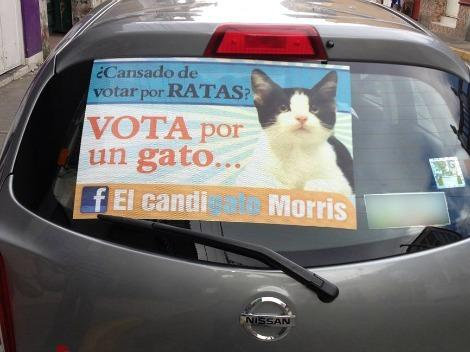 Morris sticker in a car
