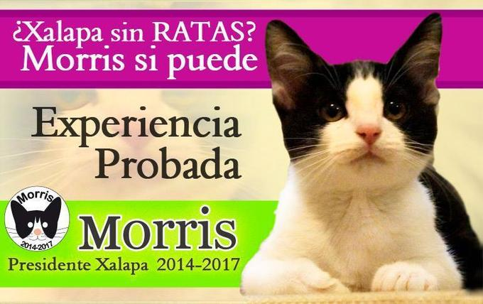 Xalapa rid of rats? Morris can. Its experience is proven.