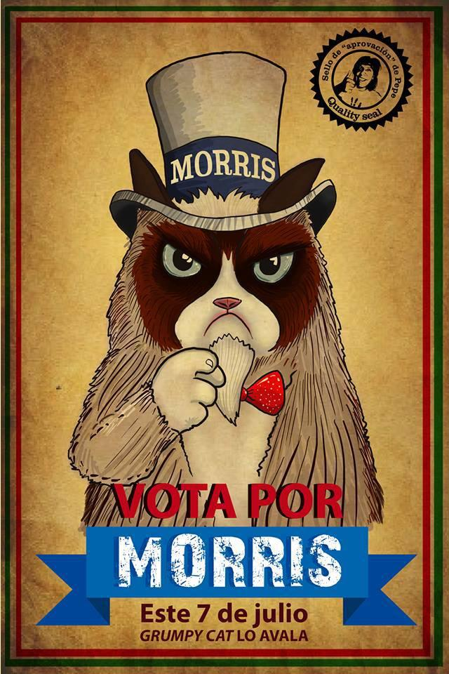 I want you to vote for Morris. -Grumpy cat