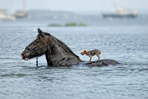 Horse helping to Dog