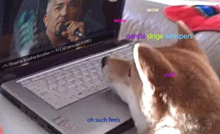 Gentle doge whispering