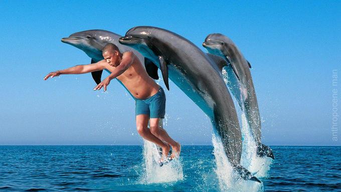 Dolphin edition