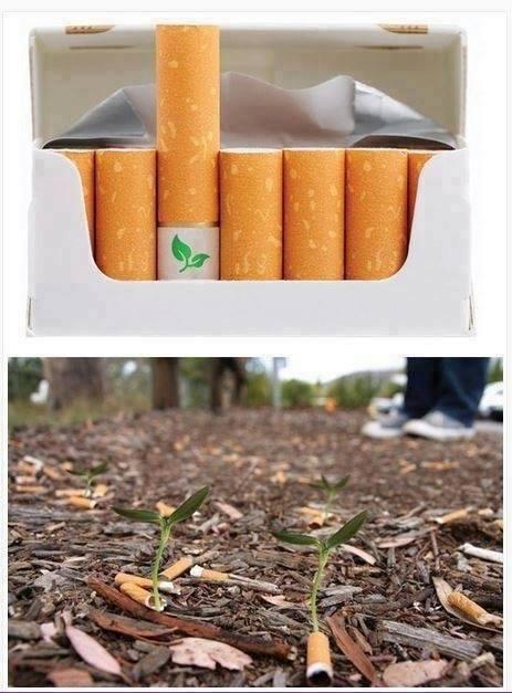 Biodegradable Cigarettes