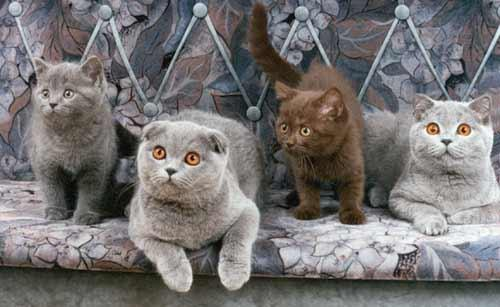 Happy cat with other cats (thumbnail)