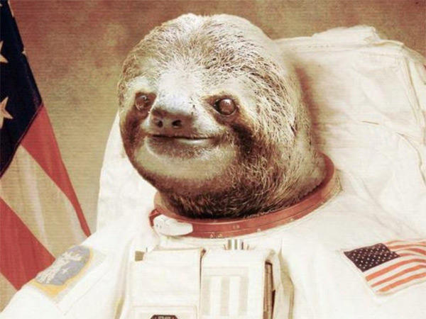 [Image - 654319] | Astronaut Sloth | Know Your Meme