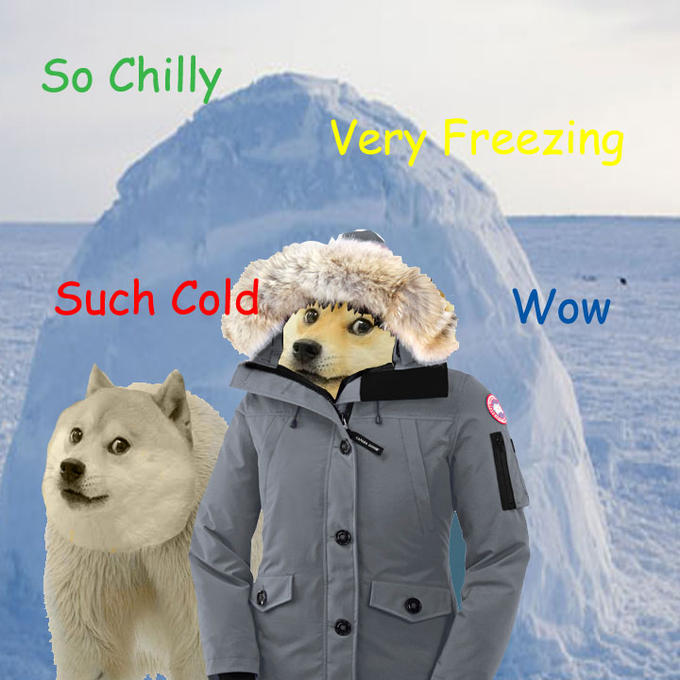 Winter Doge