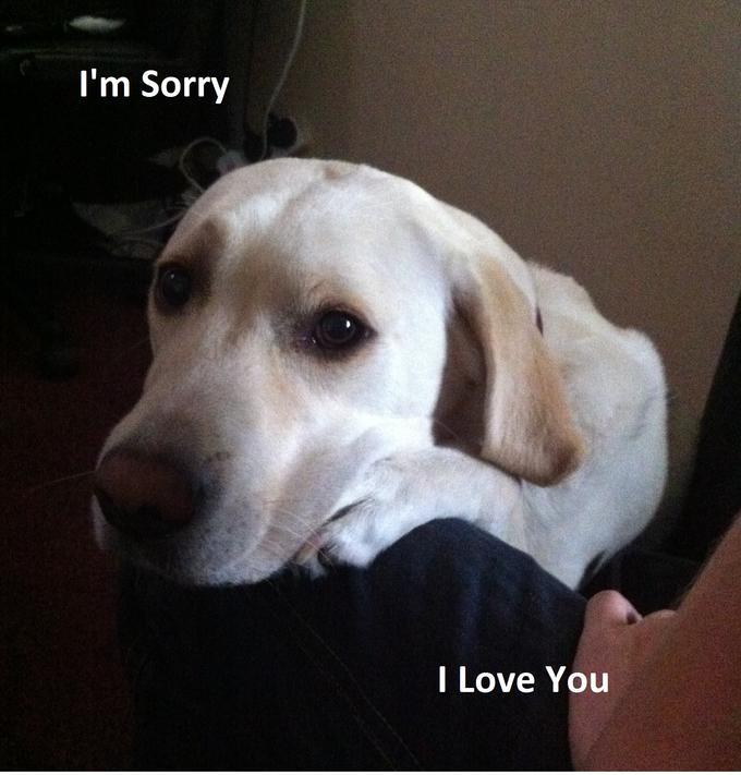 Heidi Pup