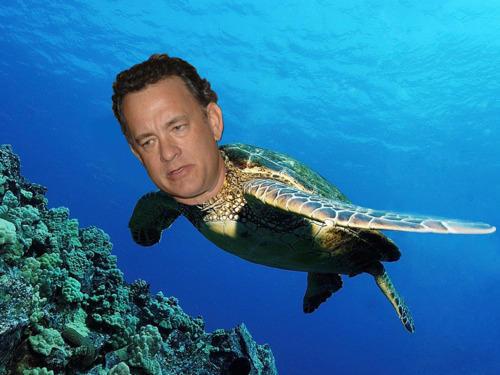 Tom Hanks is a Sea Turle