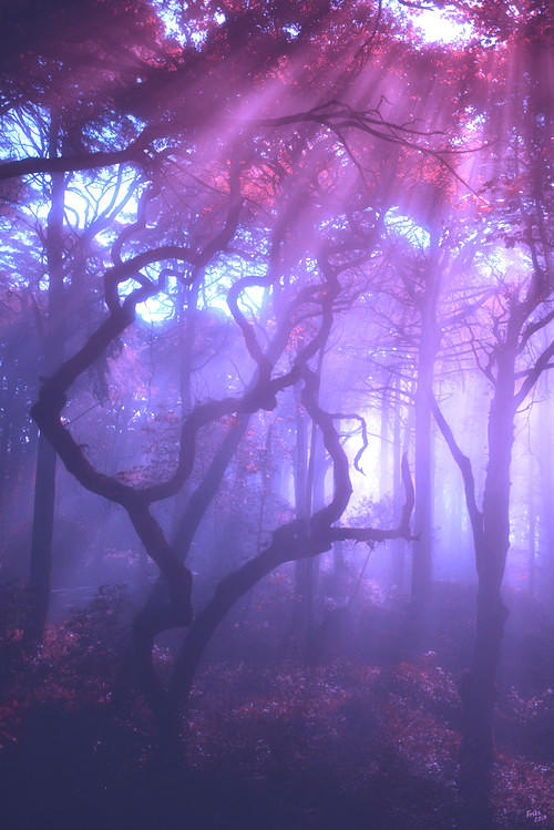 A Beautiful Violet Forest
