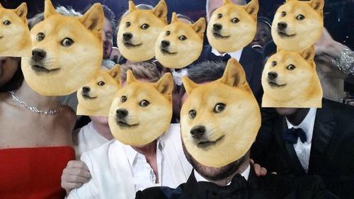Doge Selfie