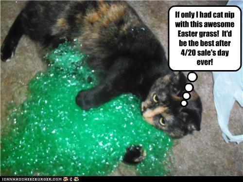 Cat With Easter Grass