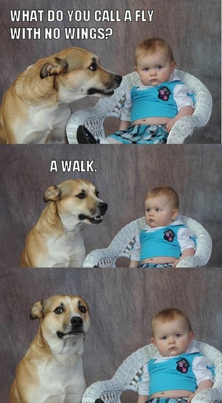 dad joke dog know your meme