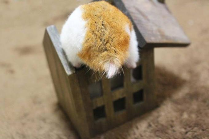Hamster Butt in a Box
